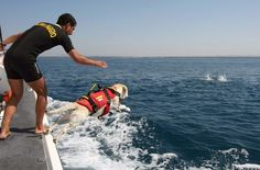 dogs who rescue people - Google Search