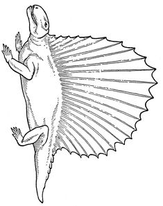 Dinosaur Coloring Pages - 1