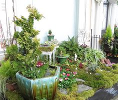 Amazing sprawling show stopper with many miniature gardens within