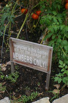 frog island community garden by Muppster, via Flickr