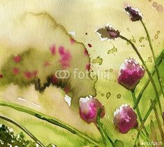 pink, weeds, thistles, forestry, clover,