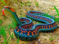 Beautiful colors for a snakes painted on rocks (CG note - this is from FB - when painting snake share this pic)