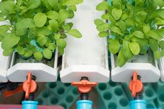 Hydroponics is the practice of growing plants, food crops or flowers in a liquid medium without the use of soil. Hydroponic crops can be grown indoors...