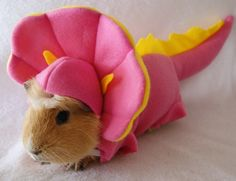 Guinea Piggies - Dino costume (it is suited for my pig gonzo!