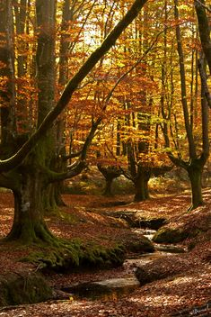 Gorbea Natural Park, Alava and Vizcaya, The Basque Country