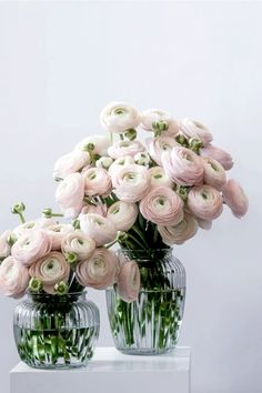Ranunculus Flowers, Flower Vases, Fresh Flowers, Beautiful Flowers, Flowers Delivered, Birth Flowers, Order Flowers, Botanical Flowers, Spring Garden