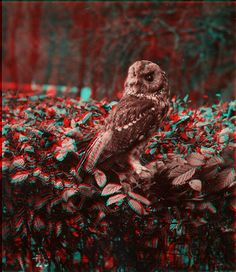 owl anaglyph