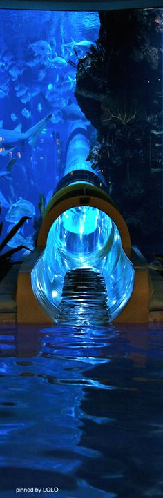 Water slide through the shark tank at the Golden Nugget...Las Vegas