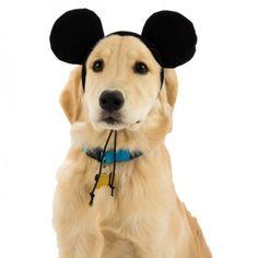 Pet Alert! 16 Adorable Disney Halloween Costumes for Pets