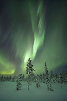 Aurora covers Frozen Forest, Sweden. The snow looks green. How neato is that?!