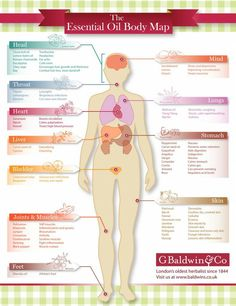 This chart by the Baldiwn Company is a great visual aid on what Essential Oil 's can help what vital bodily organs, and is something I'll keep handy when I need to find out what works where! Hope it helps you, too!