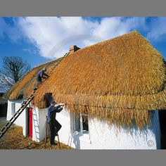 Ireland - the craft of the thatcher as seen at Kilmore, County Wexford