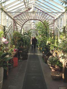 Königliche Gartenakademie, in den Glashäusern