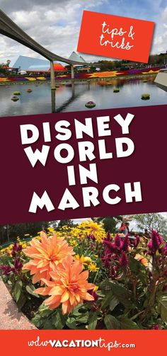 What to expect at Disney World in March. Plus tips and tricks so you can have an enjoyable vacation.