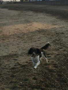 Arnie on the beach!