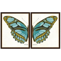 Check out this item at One Kings Lane! Butterfly Diptych II