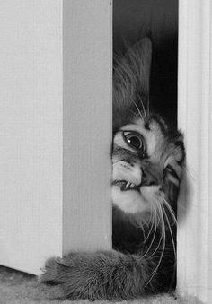 Puss-in-door