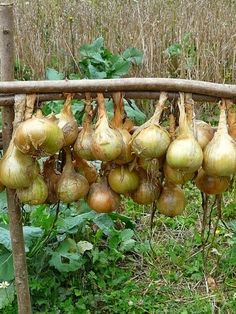How To Plant Onions! - Economically it is cheaper for most of us in a small family to simply go to the market and buy the vegetables we need, but it is not nearly as much fun as growing them yourself and the food is usually tastier and healthier for you.
