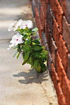 Love this sweet flower growing out of the sidewalk! From Deanna at Snippets from Springdale