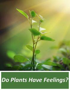 Do Plants Have Feelings?
