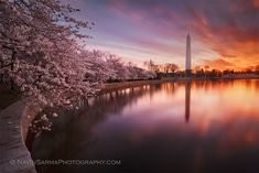Each year, the National Cherry Blossom Festival celebrates spring in Washington, DC, the gift of the cherry blossom trees, and the enduring friendship between the people of the United States and Japan.
