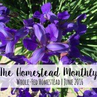 http://wholefedhomestead.com/homestead-monthly-june-2016-garden-boxes-blight-control-and-babies/