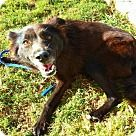 Irving, TX - Border Collie/Collie Mix. Meet Phoebe, a for adoption. http://www.adoptapet.com/pet/16966309-irving-texas-border-collie-mix