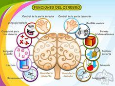 les funcions del cervell