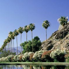 Design Sponge: Palm Springs Guide  Good list of things to do @Chelsea Jasper @Ciera Holzenthal