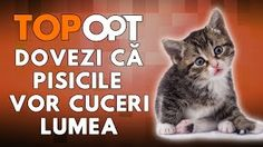 pisicile top opt - YouTube