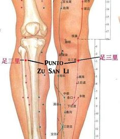 El punto de longevidad de la medicina china – eficaz para la salud