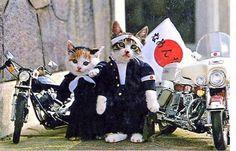 なめ猫: yakuza