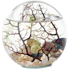 Biosphère ou écosystème vivant sans intervention humaine