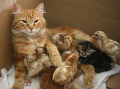 Cute Kittens - ALI JAREKJI/Newscom/Reuters
