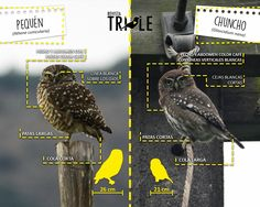 Flora, Pet Birds, Patagonia, Wildlife, Owl, Animals, Dads, Animal Science, Backyard Chickens