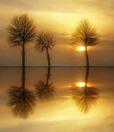 Sunset reflections of three tree souls.
