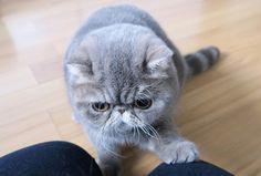 里親さんブログ今日は猫の日! 「ぷくマル」ブログからの お知らせですよ~!*´ω`* 「動物取扱業」 廃業と ブログランキング終了の お知らせ ♪ - http://iyaiya.jp/cat/archives/72233