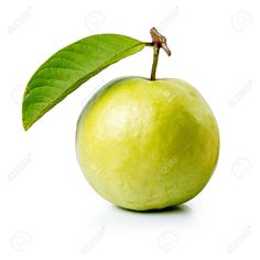 Picture of Guava Fruit with Leaf Isolated in White Background stock photo, images and stock photography. Guava Tree, Guava Fruit, Beautiful Fruits, Fruit Garden, Logo Images, Food Fresh, Fresh Fruit, Agriculture, Pear