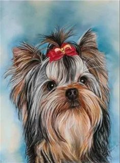 Yorkshire with red ribbon by PedronArtPortrait on Etsy Animal Paintings, Animal Drawings, Art Drawings, Tatoo Dog, Yorkie Dogs, Yorkies, Corgi Puppies, Animals And Pets, Cute Animals