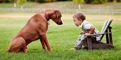 Rhodesian ridgeback – pies polujący na lwy