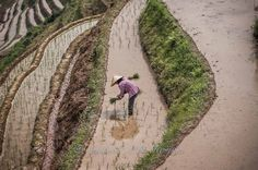 https://flic.kr/p/sHEdmV | Just a few more to go... | 50mm, asian, China, colorful, colors, Crops, d300s, detail, dof, getaway, Guilin, handheld, Hat, high altitude, holiday, Human Interest, Labour Intensive, landscape, light, local, Longji Paddy Terrace, morning, mountain, natural light, nikon, Paddy Fields, Planting, preparing, prime, Produce, Scenery, scenic, shallow, simple, syahrel, Terrace, traditional, travel, vacation, view, work, Workers