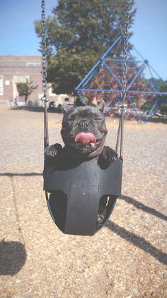Große Freude, es ist Freitag!  Jetzt schnellstens ab ins Wochenende und dann ab in die Sonne ✌️☀️  #dogsofinstagram #dog #freude #wochenende #funfriday #joyful #weekendvibes #feierabend #endlichwochenende #freitag #hundeliebe #sweet #cutenessoverload #♥️ #hundefotografie #dogs #doglover #dogstagram #igersoftheday #vscocam #immowelt #haustiere #eineweltvollerzuhause # #☀️ # #♥️