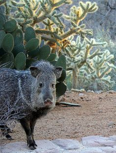 Saguaro Cactus Range Desert is largely defined by