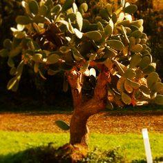 Fichi, rose e spine. #ptitzeldaday11