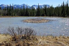 Hilltop Pond in Yamnuska Natural Area, Bow Valley west of Calgary, Alberta, Canada
