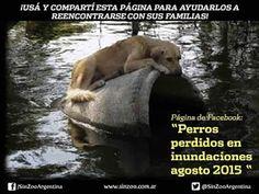 comunidad defendemos a los animales google+