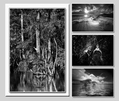 Fine Art Florida Note Cards - White Box by Clyde Butcher | Florida State Parks