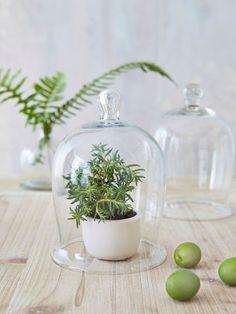Glass+Bell+Jar