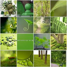 Some Greens  | #mosaicmontagemonday #montage #collage #green