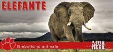 Simboli animali: il significato dell'Elefante